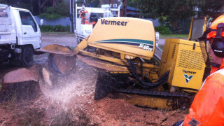 stump-removal-tree-removal-mount-eliza