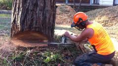 mt-eliza-tree-removal-service