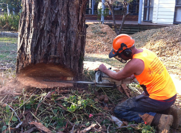mt-eliza-tree-removal-service