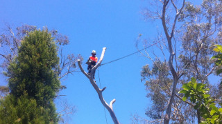 tree-removal-tyabb