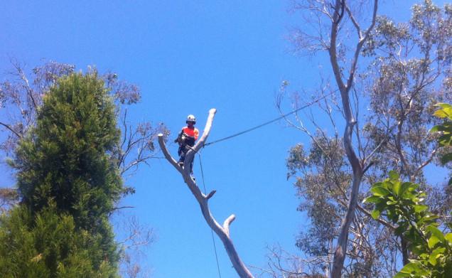 tree-removal-tyabb