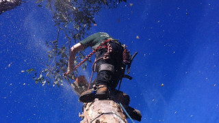 tree-removal-mt-eliza-arborist