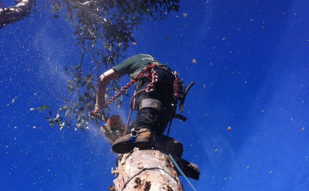 tree-removal-mt-eliza-arborist