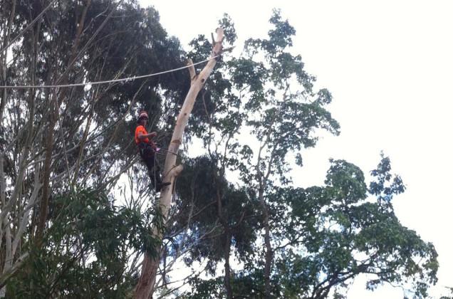tree-removal-mt-martha