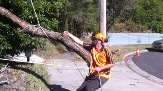 tree-removal-mt-eliza