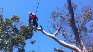 tree-removal-mount-martha