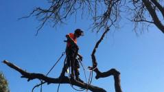 tree-removal-mount-eliza-news
