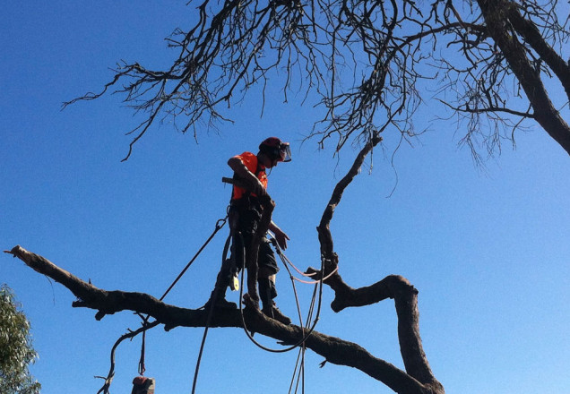 tree-removal-mount-eliza-news