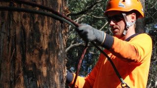 Tree Removal Mornington, Arborists from tree Removal Mount Eliza.