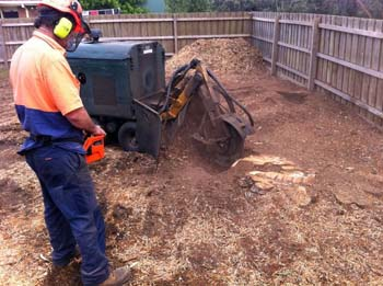 Stump Removal - Tree Removal Mount Eliza