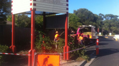 tree-removal-mornington-peninsula
