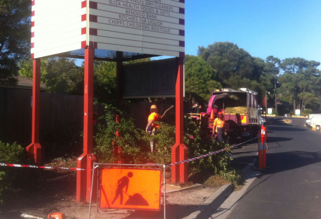 tree-removal-mornington-peninsula