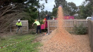 Tree Removal Moorooduc