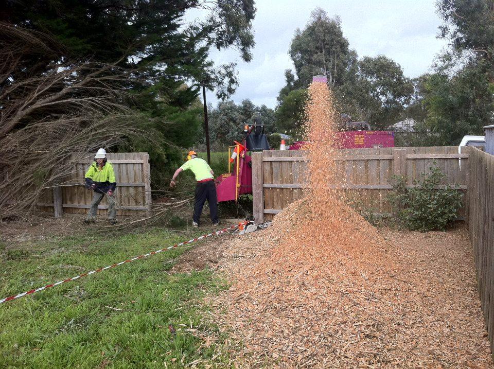 Tree Removal Moorooduc