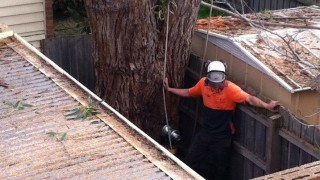 Do You Need A Council Permit? Tree Removal Mt Eliza